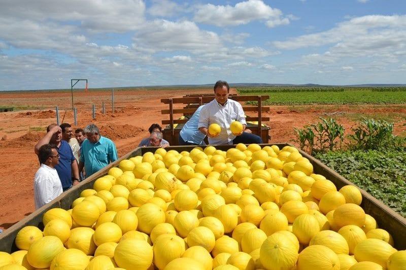 Exportações do RN crescem 13,6% no primeiro trimestre impulsionadas pela fruticultura