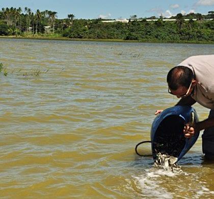 Prefeitura e DNOCS despejam 200 mil alevinos de tilápia na Lagoa de Extremoz