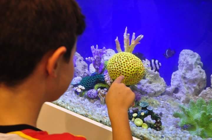 eira Internacional de Aquarismo acontece no Centro de Convenções