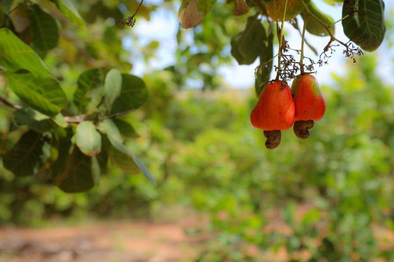 Cerca de 90 mil famílias de agricultores estão aptas a vender suas produções para o Estado
