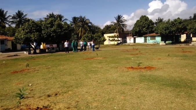 Planta Natal ultrapassa marca de 1.300 árvores plantadas