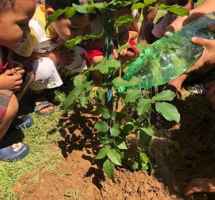 """Maratona Escolar"" planta cerca de 100 árvores esta semana"