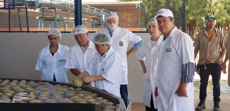 Rio Grande do Norte recebe missão chinesa para inspeção do melão exportado