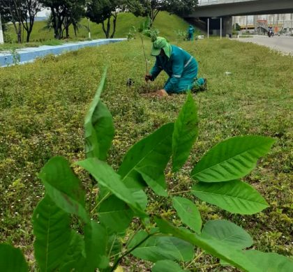Planta Natal atinge marca de 4.000 mudas plantadas e fortalece ações de parcerias